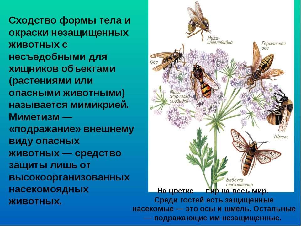 Сходство формы тела и окраски незащищенных животных с несъедобными для хищник...