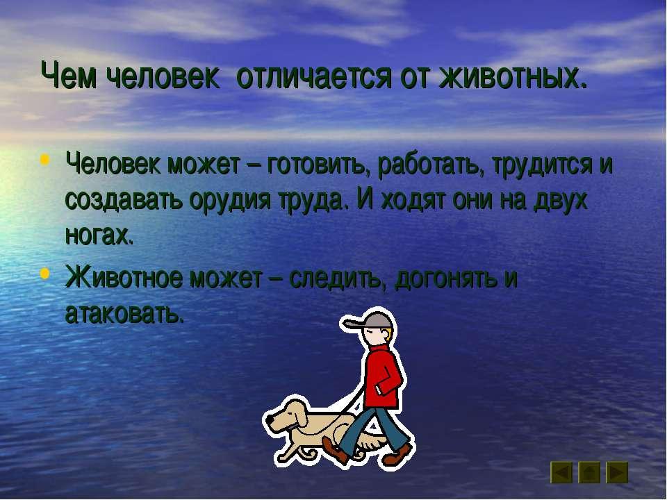 Чем человек отличается от животных. Человек может – готовить, работать, труди...