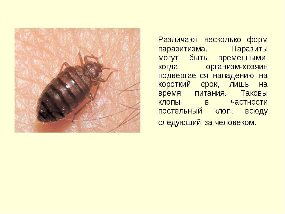 Различают несколько форм паразитизма. Паразиты могут быть временными, когда о...