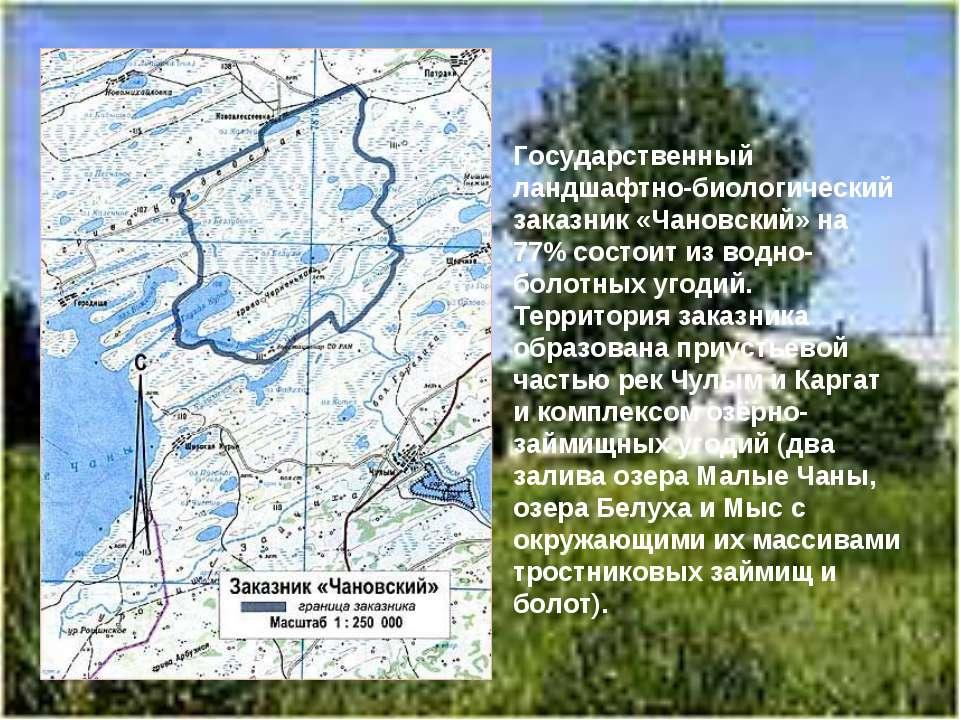 Государственный ландшафтно-биологический заказник «Чановский» на 77% состоит ...