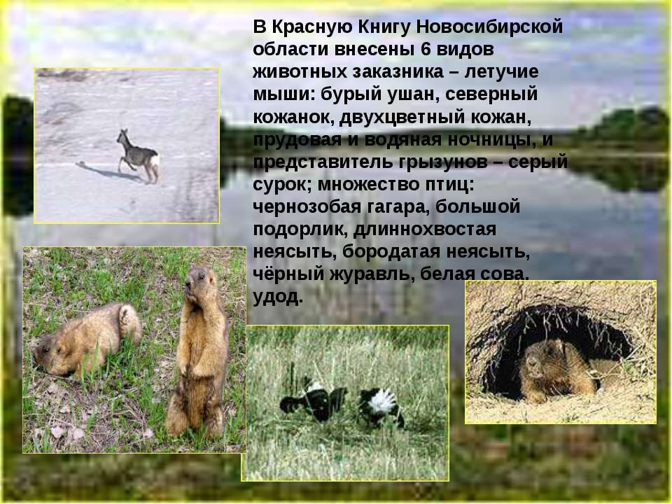 В Красную Книгу Новосибирской области внесены 6 видов животных заказника – ле...