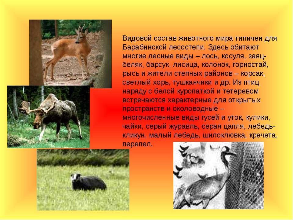 Видовой состав животного мира типичен для Барабинской лесостепи. Здесь обитаю...