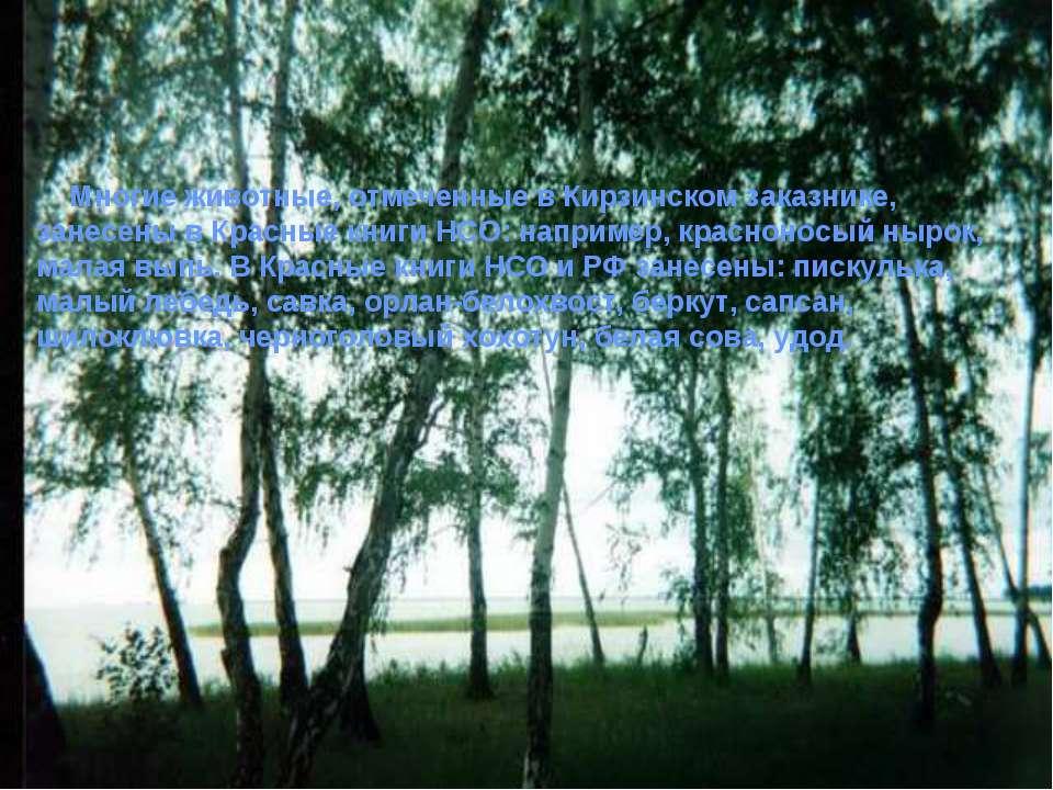 Многие животные, отмеченные в Кирзинском заказнике, занесены в Красные книги ...
