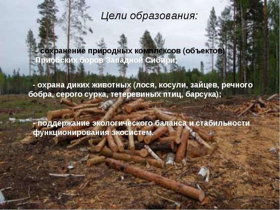 Цели образования: - сохранение природных комплексов (объектов) Приобских боро...