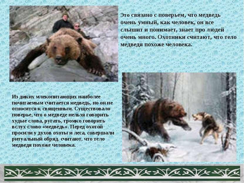 Из диких млекопитающих наиболее почитаемым считается медведь, но он не относи...