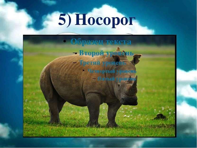 5) Носорог