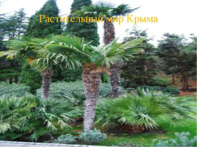 Растительный мир Крыма