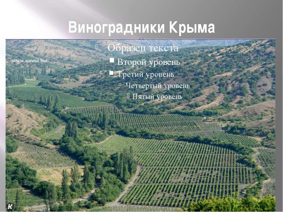 Виноградники Крыма