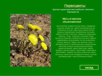 Первоцветы Мать-и-мачеха обыкновенная назад Краткая характеристика наиболее т...