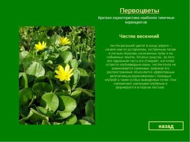 Первоцветы Чистяк весенний назад Краткая характеристика наиболее типичных пер...
