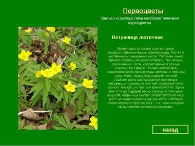Первоцветы Ветреница лютичная назад Краткая характеристика наиболее типичных ...