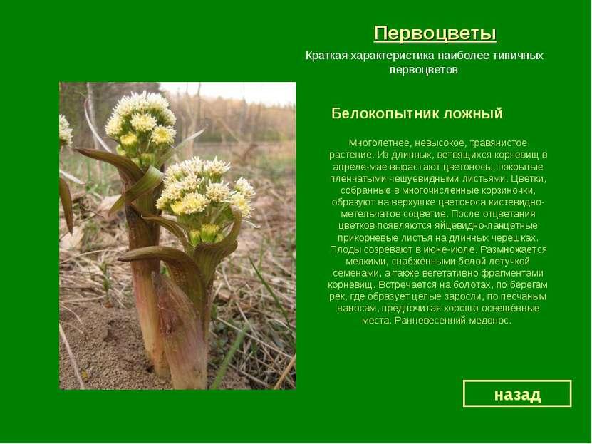 Первоцветы Белокопытник ложный назад Краткая характеристика наиболее типичных...