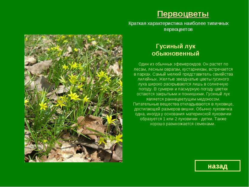 Первоцветы Гусиный лук обыкновенный назад Краткая характеристика наиболее тип...