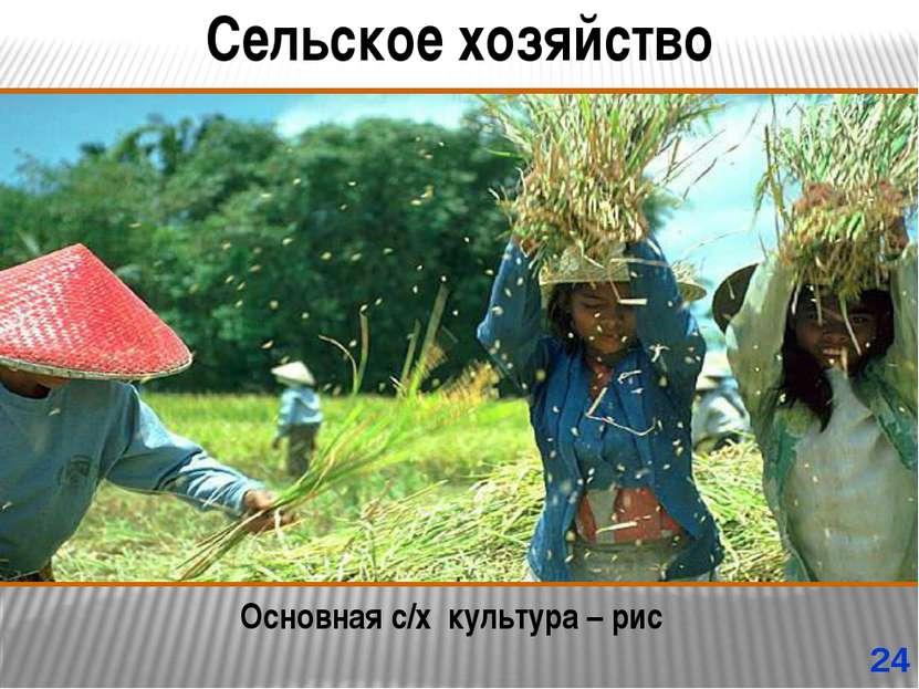 Сельское хозяйство Основная с/х культура – рис