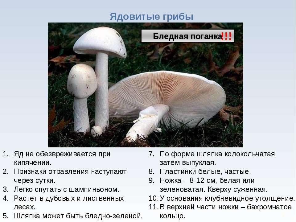 * Ядовитые грибы !!! Яд не обезвреживается при кипячении. Признаки отравления...