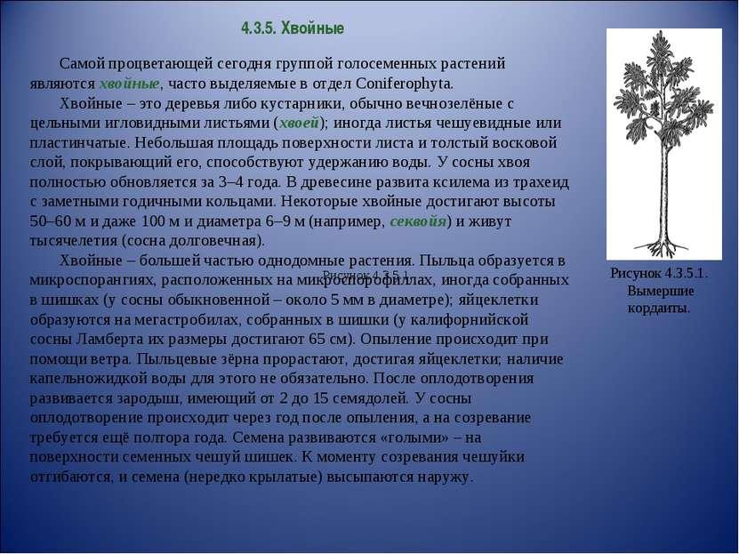 4.3.5. Хвойные Самой процветающей сегодня группой голосеменных растений являю...
