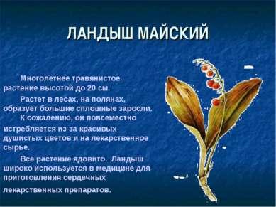 ЛАНДЫШ МАЙСКИЙ Многолетнее травянистое растение высотой до 20 см. Растет в ле...