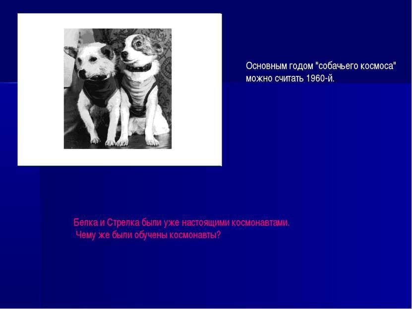 """Основным годом """"собачьего космоса"""" можно считать 1960-й. Белка и Стрелка были..."""