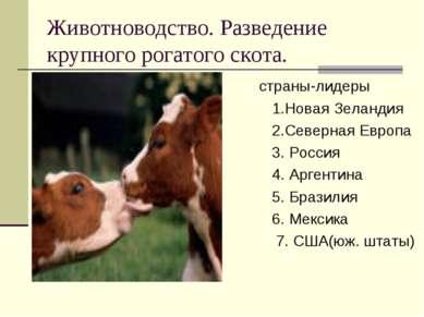Животноводство. Разведение крупного рогатого скота. страны-лидеры 1.Новая Зел...