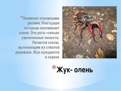 Знаменит огромными рогами, благодаря которым напоминает оленя. Эти рога –силь...