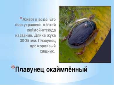 Живёт в воде. Его тело украшено жёлтой каймой-отсюда название. Длина жука 30-...