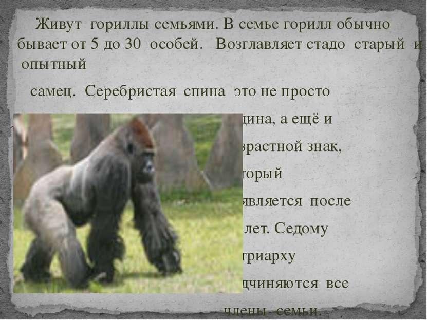 Живут гориллы семьями. В семье горилл обычно бывает от 5 до 30 особей. Возгла...