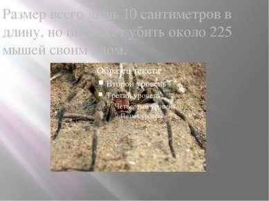 Размер всего лишь 10 сантиметров в длину, но он может убить около 225 мышей с...
