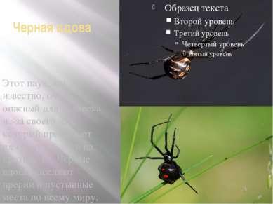 Черная вдова Этот паук, как известно, очень опасный для человека из-за своего...