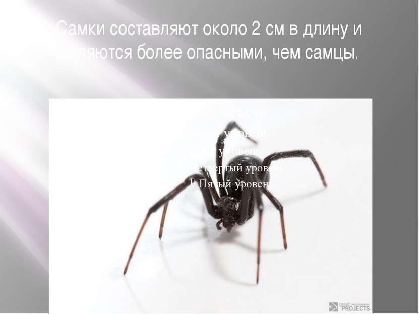 Самкисоставляют около 2 см в длину и являются более опасными, чем самцы.