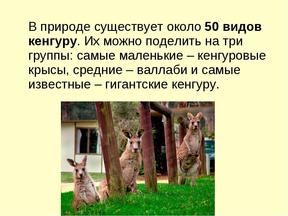 В природе существует около50 видов кенгуру. Их можно поделить на три группы:...