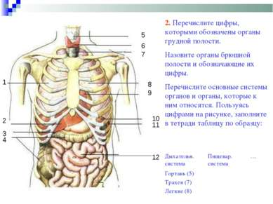 1 2 4 3 5 6 7 8 9 10 11 12 2. Перечислите цифры, которыми обозначены органы г...
