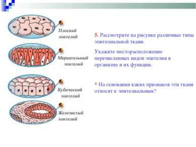 5. Рассмотрите на рисунке различные типы эпителиальной ткани. Укажите местора...