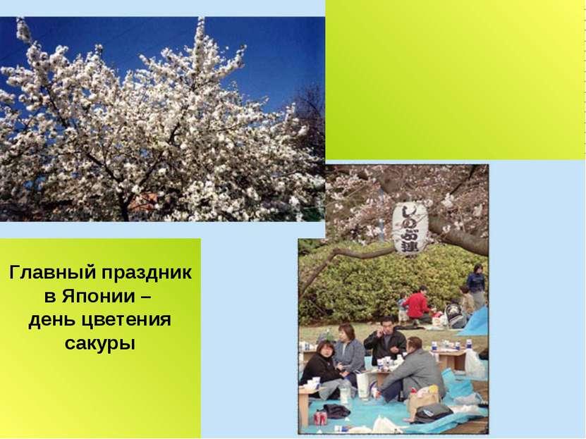 Главный праздник в Японии – день цветения сакуры