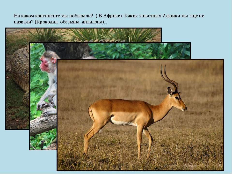 На каком континенте мы побывали? ( В Африке). Каких животных Африки мы еще не...