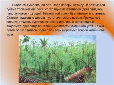 Около 350 миллионов лет назад поверхность суши покрывали густые тропические л...