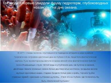В 1977 г. глазам геологов, спустившихся в подводном аппарате в море в районе ...