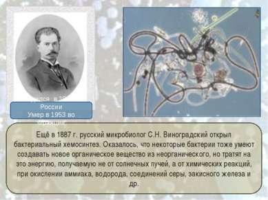 Ещё в 1887г. русский микробиолог С.Н.Виноградский открыл бактериальный хемо...