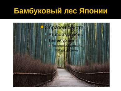Бамбуковый лес Японии