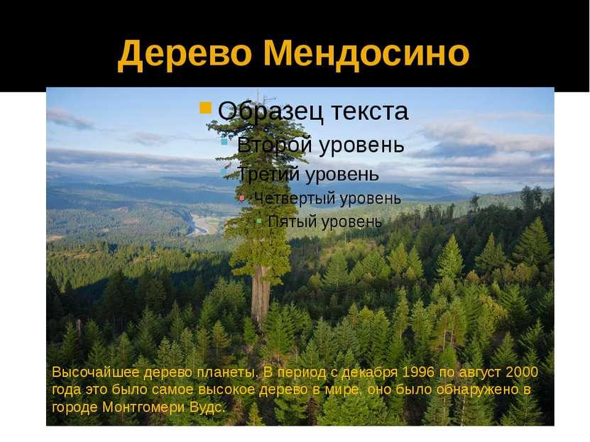 Дерево Мендосино Высочайшее дерево планеты. В период с декабря 1996 по август...