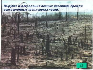 Вырубка и деградация лесных массивов, прежде всего влажных тропических лесов.