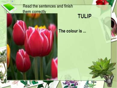 TULIP The colour is ... Read the sentences and finish them correctly