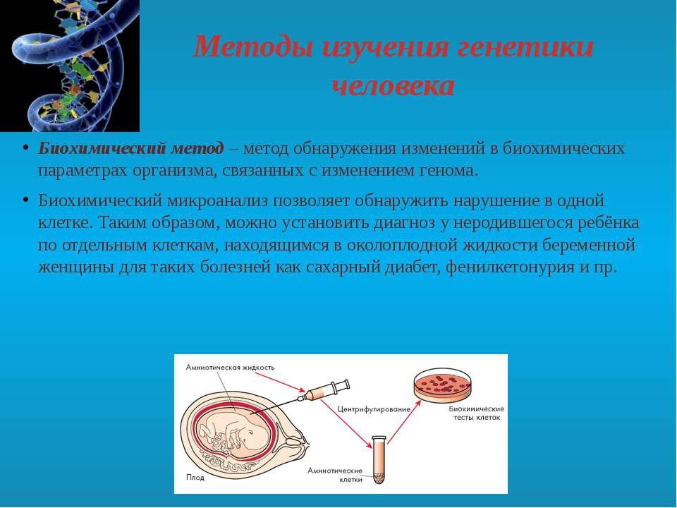 Методы изучения генетики человека Биохимический метод– метод обнаружения изм...