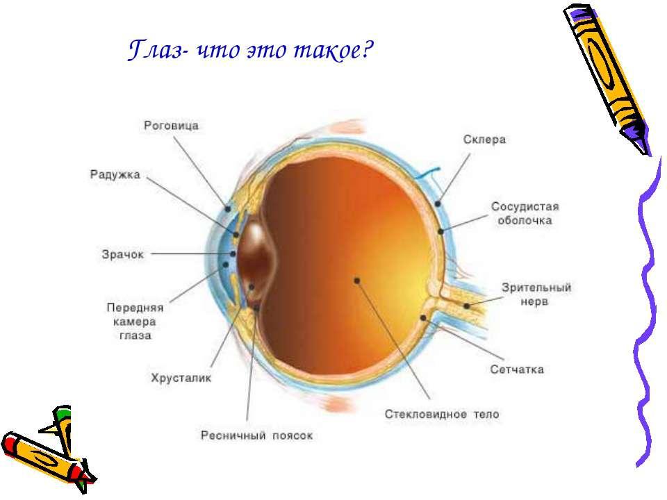 Глаз- что это такое?