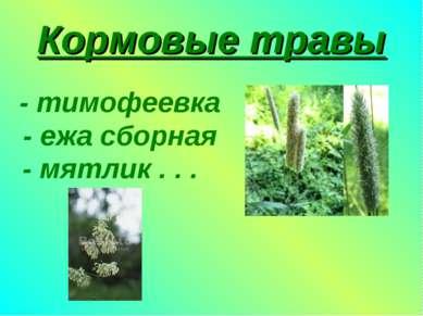 Кормовые травы - тимофеевка - ежа сборная - мятлик . . .