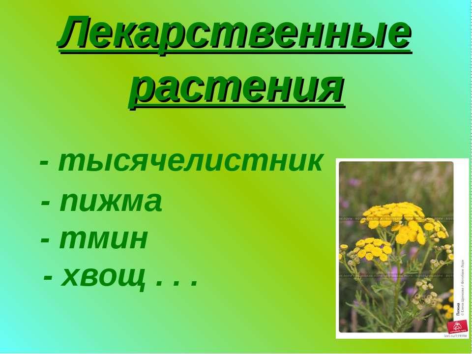 Лекарственные растения - тысячелистник - пижма - тмин - хвощ . . .