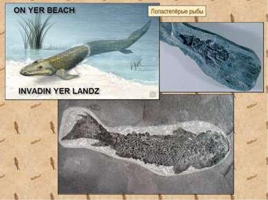 Лопастепёрые рыбы