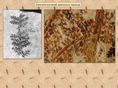 Отпечатки растений девонского периода