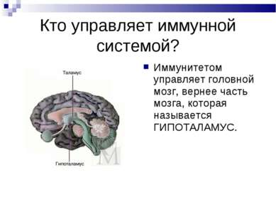 Кто управляет иммунной системой? Иммунитетом управляет головной мозг, вернее ...