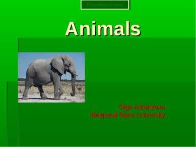 Animals Olga Ashurkova Belgorod State University