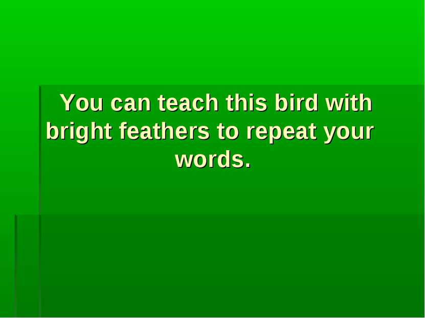 You can teach this bird with bright feathers to repeat your words.